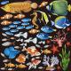 熱帯魚 看板・ボード用イラストシール
