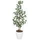 【送料無料】オリエンタルフイカス (人工観葉植物) 高さ115cm 光触媒 (204A150)
