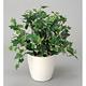 ホーランドアイビー (人工観葉植物) 高さ40cm 光触媒 (256A45)