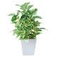 ポトスポット (人工観葉植物) 高さ19cm 光触媒機能付 (434A20)
