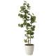 【送料無料】シーグレープ (人工観葉植物) 高さ160cm 光触媒 (616A280)