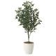 【送料無料】オリーブ (人工観葉植物) 高さ110cm 光触媒 (617A180)