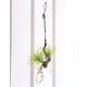 エアープランツW (壁掛タイプ) (造花) 高さ54cm 光触媒 (647A48)